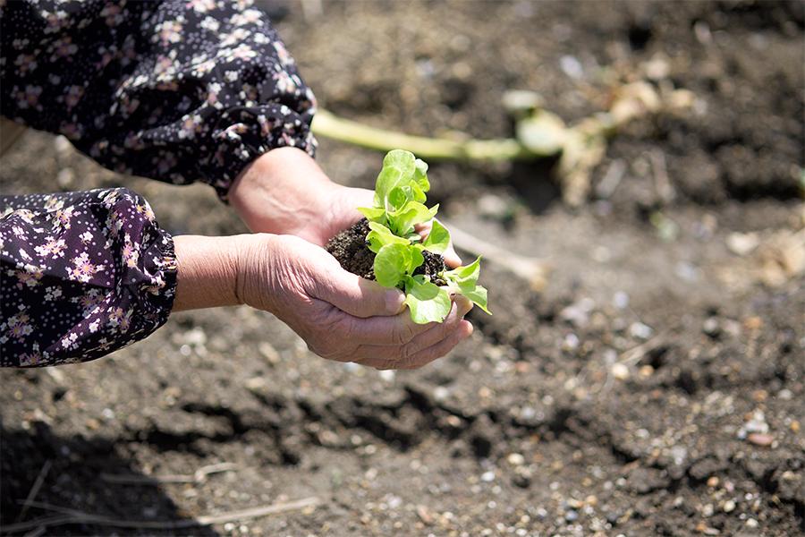 自然農法・自然食による救い