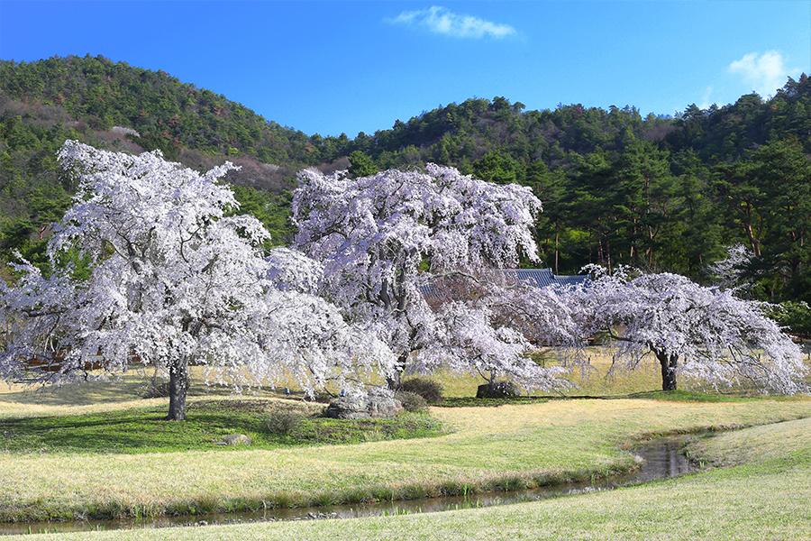 京都・平安郷